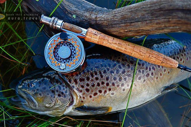 """Résultat de recherche d'images pour """"trout river Moonbah"""""""